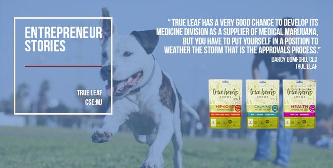 True Leaf twins medical marijuana ambitions with growing line of hemp supplements for pets
